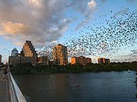 The Congress Bridge is home to millions of Mexican Free-Tail bats who swarm out from underneath at dusk. Get the best view of the bats by renting a kayak and viewing from underneath.