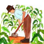 Por René Sánchez Galindo mineduc.edu.gt El maíz nativo o criollo -como le llaman en el campo-, es más grande que los grupos sociales que lo defienden. Esta planta, la más importante del mundo, y cuyo centro de origen se encuentra en el territorio de nuestro país, tiene más de ocho mil años