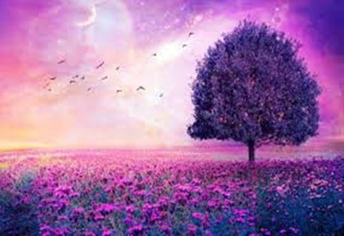 RÜYAYI KİM GÖRÜYOR? (Beyin Mi? Bilinç Mi?) http://www.sanatduvari.com/ruyayi-kim-goruyor-beyin-mi-bilinc-mi/ #rüya #beyin #bilinç #hayal #düşünce #sanat #sanatduvarı