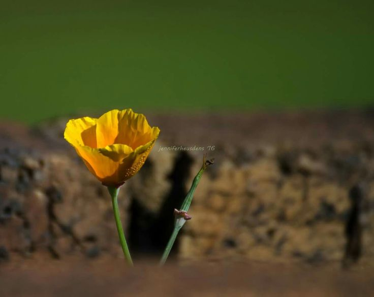 Sunrise flower  Flower on a farm Photography Mpumalanga South Africa