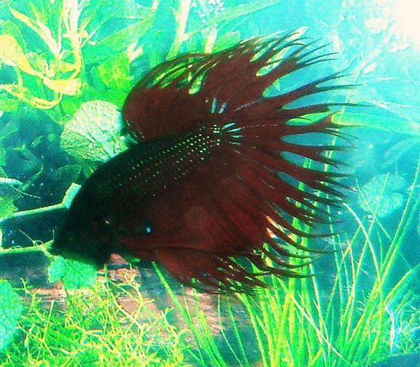 11 best betta diseases images on pinterest betta betta for Betta fish medicine