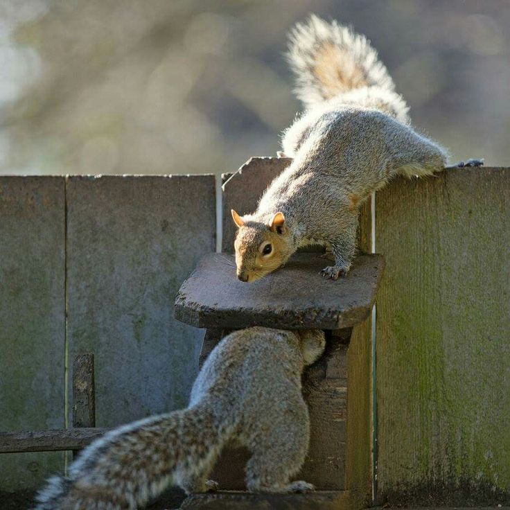 Best Scoiattoli Images On Pinterest Squirrels Animals And - Student befriends campus squirrels then dresses them in the cutest outfits ever
