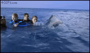 These people who almost starred in a documentary about Jaws. | 21 Incredibly Close Calls soooo scarey!!
