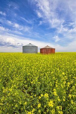 Red bin and canola during summer in Saskatchewan