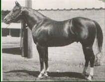 Doc Bar was foaled in 1956. In 1962, Dr. and Mrs. Stephen Jensen purchased Doc Bar from his breeders, Tom and Jack Finley. At 14.3, 1,000 pounds, Doc Bar was a washout on the race track. He wasn't even a performance horse, but he turned out to be a good halter horse and an extraordinary sire whose get totally transformed the sport of cutting. Although he was never ridden in competition, his sons and daughters forever changed the cutting horse industry with their ability and style. equine