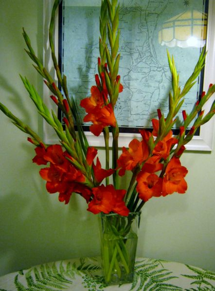 I love gladiolus stems. They are very economical at this time of year. My local supermarket sells bunches of ten for under $2.00. They are a great flower for a Fourth of July flower arrangement. I …