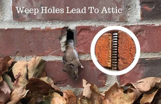 5 Signs You Have Mice In Your Attic And How You Can Remove Them Rid O Mice Getting Rid Of Mice Rodent Infestation Rodent Removal