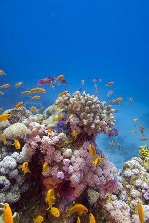 Récif de corail coloré avec des poissons exotiques au fond de la mer rouge photo
