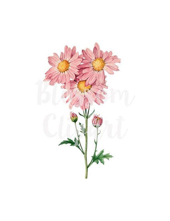 Pink Daisies Clip Art Floral Illustration Clip Art Flower Botanical Digital Download 1359 Floral Art Pink Daisy Daisy Flower Drawing