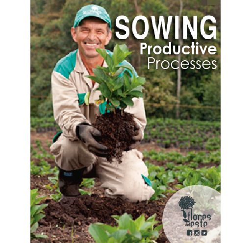 Productive Processes: Sowing #hydrangeas #flowers #shine #pink #homedeco #springflowers
