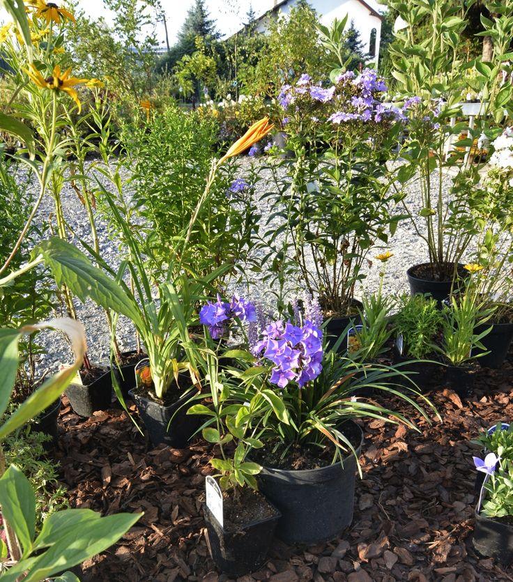 Kompozycja do ogrodu wiejskiego - swobodnego, obfitego, naturalnego. Rodzime gatunki roślin uzupełnione zostały korą.