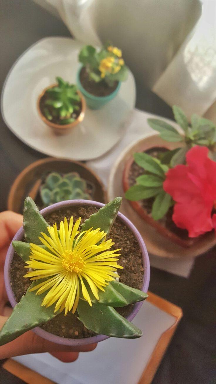 ¡Floreció!  04/07/17 #Fotodiario #Fotografia #Photo #Flores #Momentos #UnaImagenValeMas