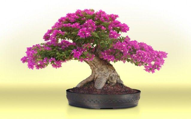 Dodejte vašemu domovu orientální kouzlo – pěstujte bonsaje