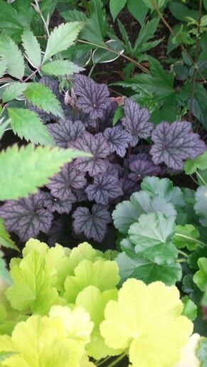 Olika blad, färg och form