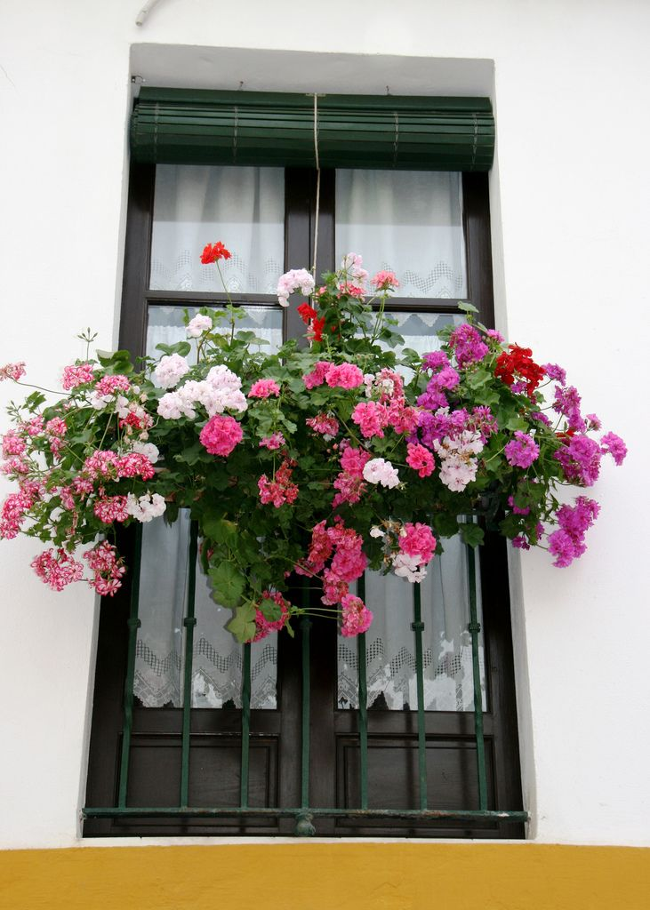 Window Box / Seville, Andalucia, Spain