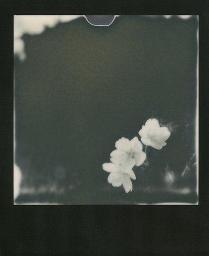 Nobuyoshi Araki: Sakura The Photography Legend Turns a Sensual Lens to Tokyo's Annual Floral Explosion