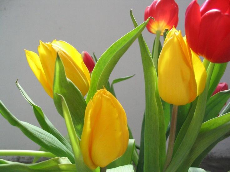 stelian ilie flower 3