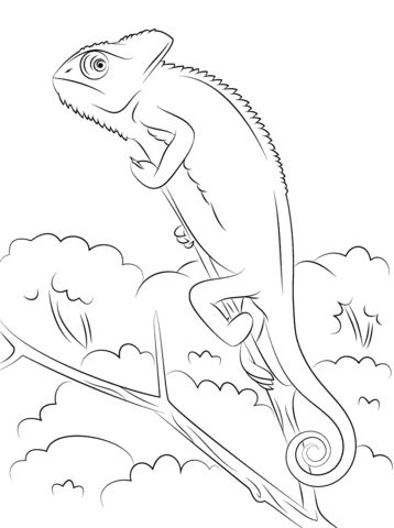 veiled chameleon coloring page from chameleon category