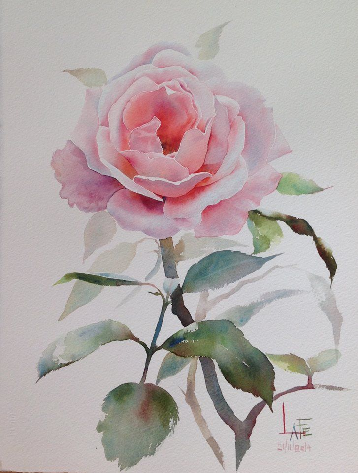 17 Best ideas about Watercolor Rose on Pinterest | How to ...