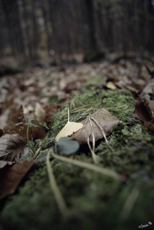 by ♡Gosia M more: http://xgosia-mx.tumblr.com   &   https://www.facebook.com/gosiamphoto  #forest #gosiam #view #wood #leaf #dark