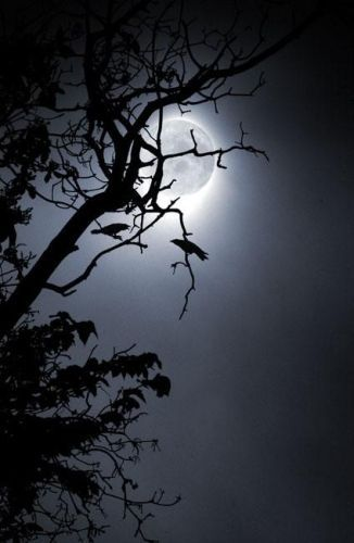 """""""Silver Moon - th' omen o' death...""""    Silver Moon Deja vu    (the second book in the Deja vu series - a story of Pirates, Celtic witches and the Caribbean in 1724)"""