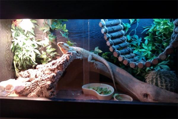 lizzards tanks ideas | Sorry for the poor pic quality, im an awful photographer.