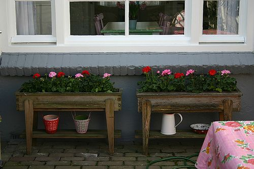 Shade Plants Container Porches