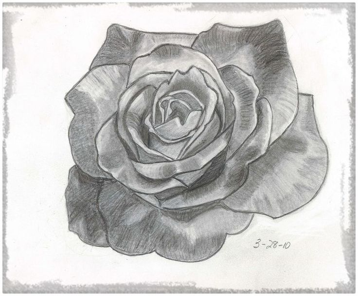 Worksheet. 7 best rosas images on Pinterest  Drawings A color and Art flowers