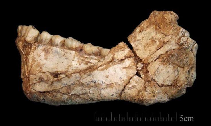 """Los restos más antiguos conocidos del """"Homo sapiens"""", datados hace entre 300.000 y 350.000 años, han sido hallados en el yacimiento arqueológico Yebel Irhoud (Marruecos)..."""