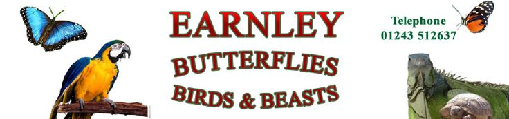 Earnley Butterflies, Birds and Beasts - Near Chichester