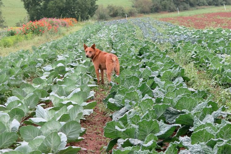 Reducing Risks from Animals and Manure: Recognize the risks associated with animals and animal manure and learn tips on how to reduce farm food safety risks.