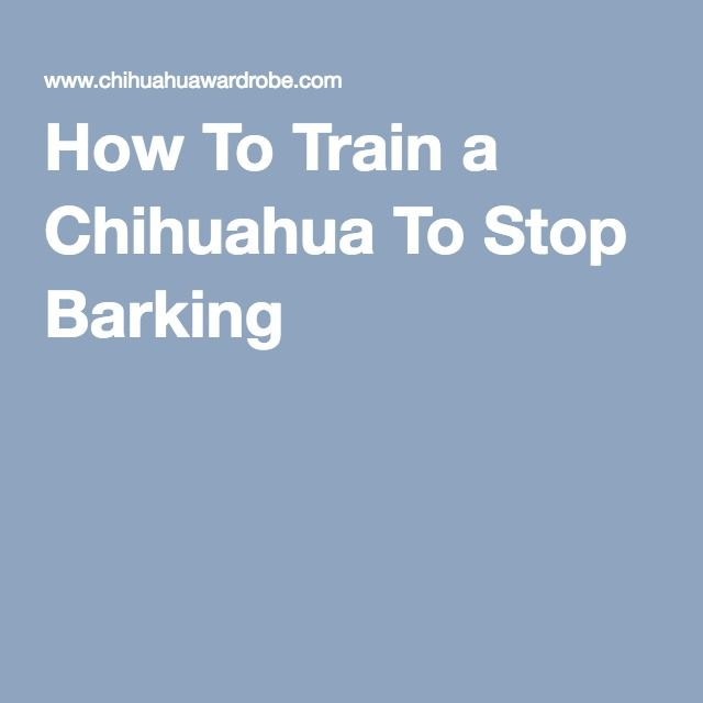 How To Train a Chihuahua To Stop Barking