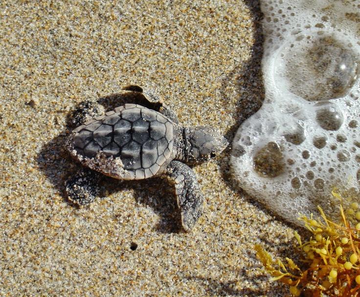 Turtle Beach P Vs X