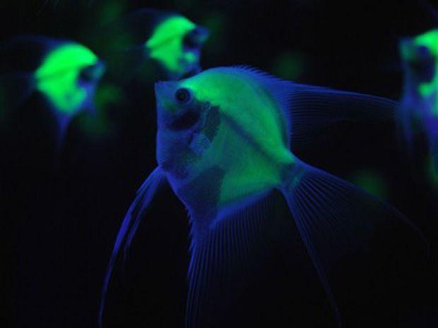 fundo do mar peixes estranhos - Pesquisa Google