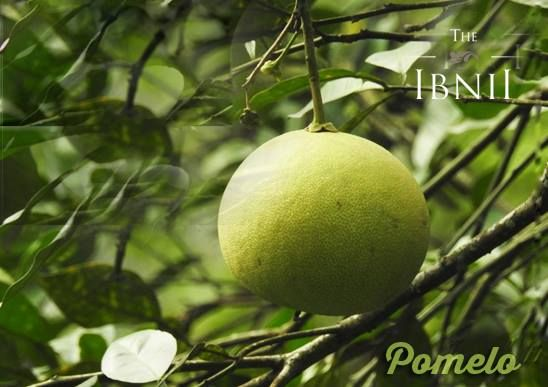 The goodness of green at #TheIbnii_Coorg #organic #bionatural #organicfruits #gardenofibnii #luxuryresort #ecoluxe #ecohotel #ecoresort
