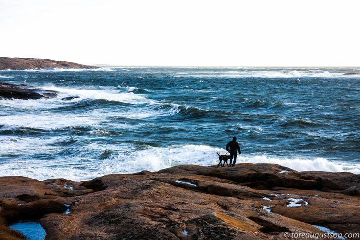 Sea,man and a dog