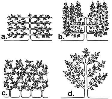espailertypes.jpg (374×330) - http://ottenbros.wordpress.com/2011/05/14/espalier-project-part-one-%E2%80%93-building-the-structure-and-tree-selection/
