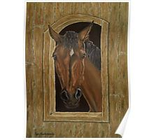 Gifts for animal, horse, lovers, Poster