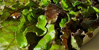 beet suite: Nutritional value of beets - Part 5: Beet greens (raw)