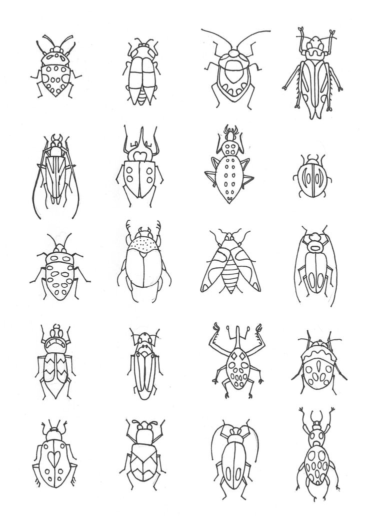 Insects and beetles illustration