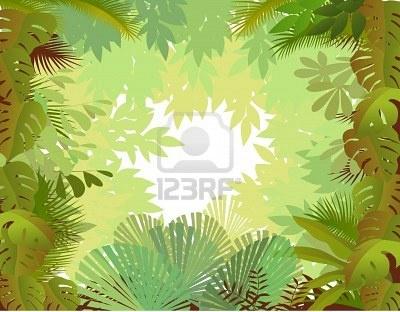 fondo bosque, selva