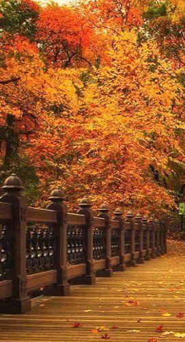 Sun-Kissed Autumn