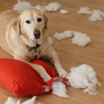 Пробиотик за Кучета 90 капсули | 21st Century Pet на супер цена спомага за стимулиране на имунната система http://biomall.bg/hranitelni-dobavki-za-kucheta-kotki/probiotic-za-kucheta-kapsuli-21st-century-pet-cena