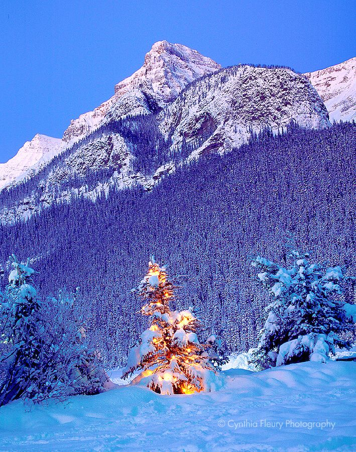 Rocky Mountain Christmas Tree- Winter Lake Louise in Canadian ...