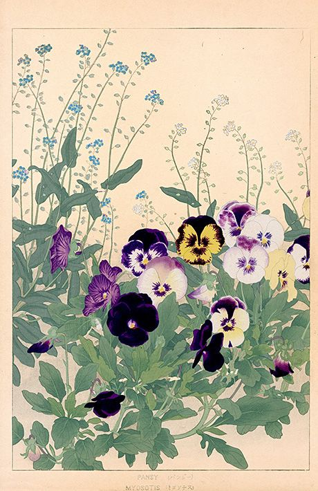 Chigusa Soun, Flowers of Japan.  Antique Woodblock Print of pansies.  Interesting how the pansies seem to pop off the page.