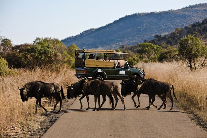 Pilansberg Game Reserve, North West Province, South Africa