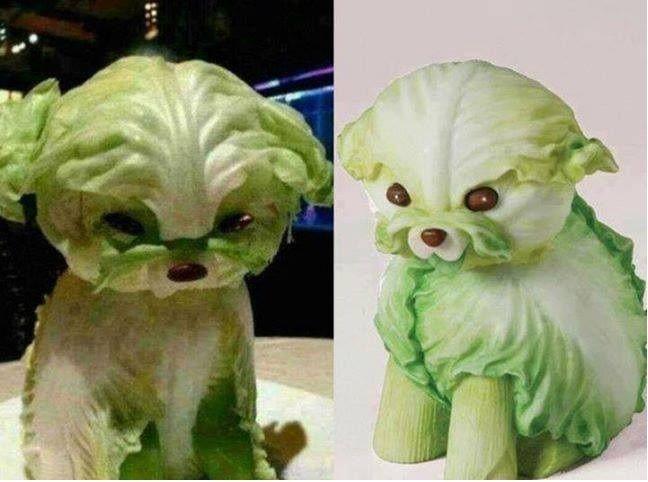 Dog Food Art