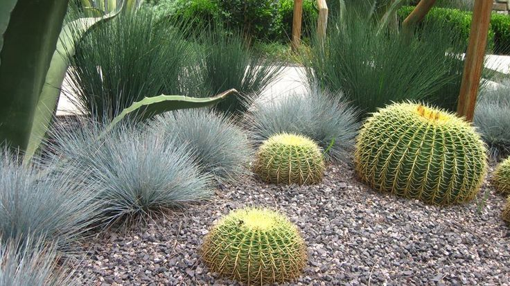 Cacti, contrasting grasses and gravel