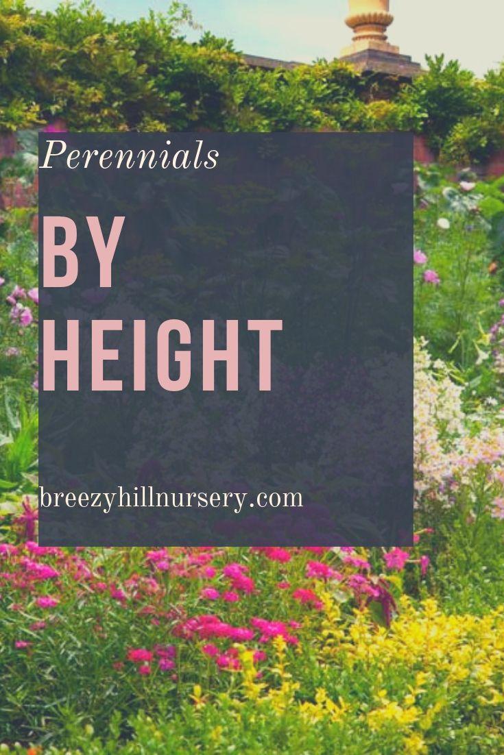 Perennials By Height Perennials Sun Perennials Flowers Perennials