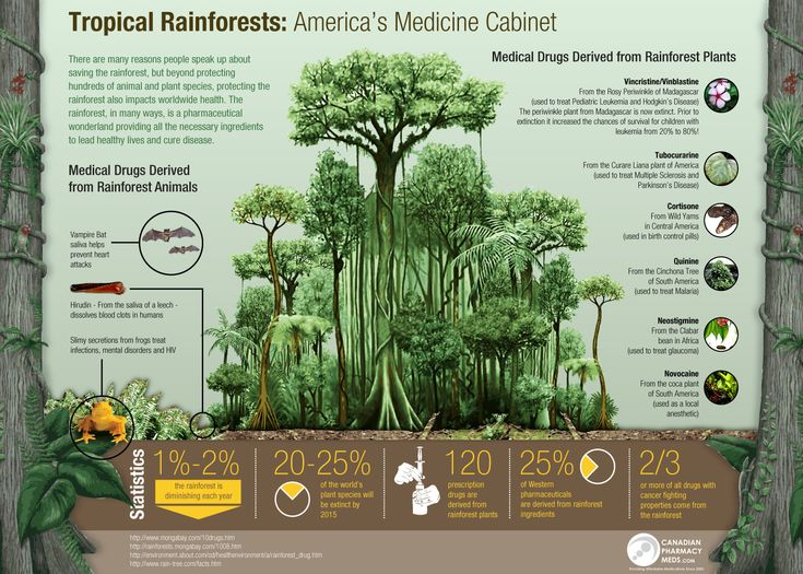 rainforest infographic - Google Search